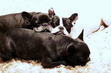 Hundraser – Mer info